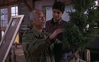 Mr. Miyagi and bonsai tree